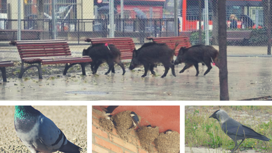 fauna silvestre en medios urbanos